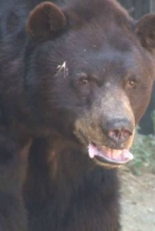 Bear And House Cat Become Fast Friends At The Zoo