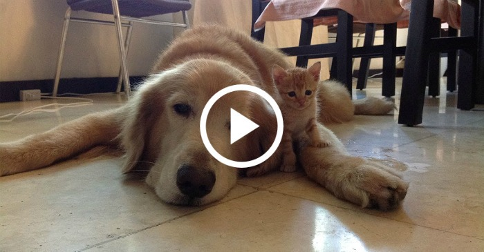 This Kitten Loves Her Dog Best
