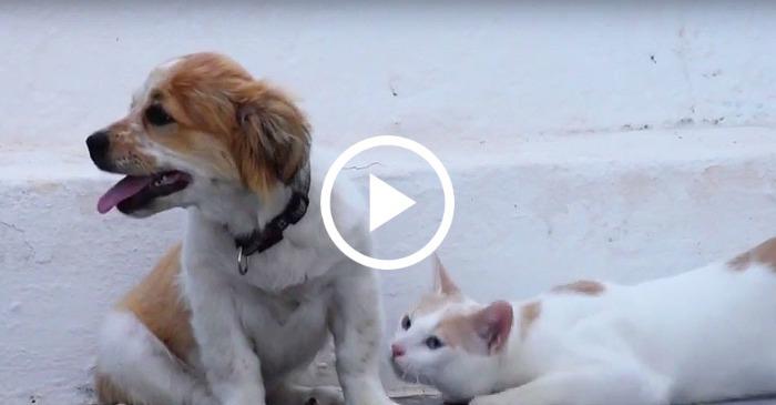 puppy-meets-kitten-forms-instant-friendship
