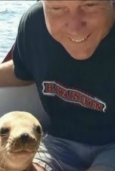 Sea Lion Pup Jumps On Boat To Cuddle