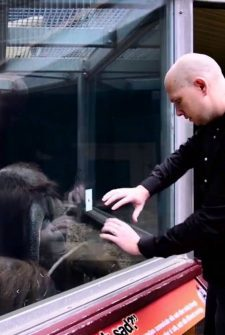This Guy Performed A Magic Trick For An Orangutan, And I Can Not Figure It Out!