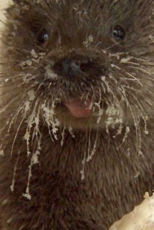 Elderly Man And Otter Become Unlikely (and adorable) Friends