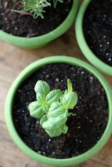 5 Fun Recipes Using your Indoor Herb Garden