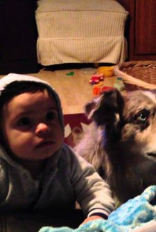 Mom Tries To Get Baby To Say 'Mama' For A Bite Of Food, Dog Says It Instead