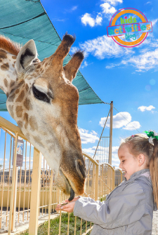 10 Tips for a Fantastic Zoo Trip