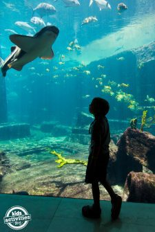 Why You Should Travel With Your Preschooler