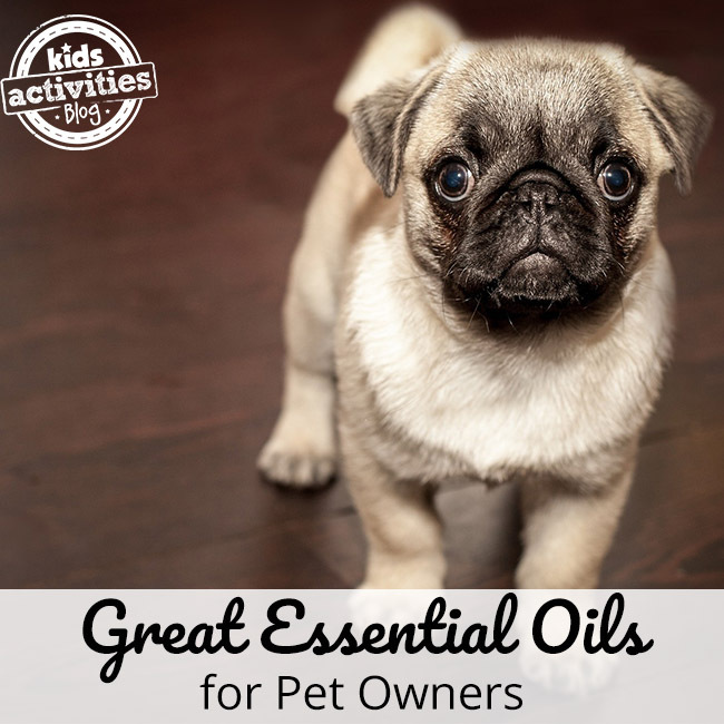 Essential Oils for Pets?