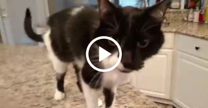 Worksheets For Cats Meow : This cat sounds like he swallowed barry white
