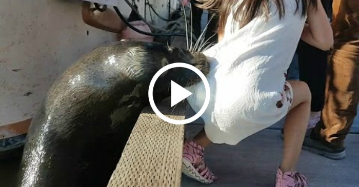 Terrifying Moment When A Sea Lion Snatches A Girl Off A Wall And Drags ...