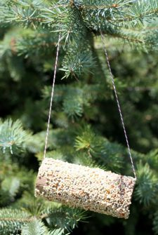 Kids Crafts: DIY Bird Feeder