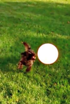 Puppy Ruins Playtime With Popped Balloon