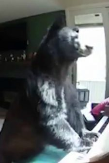 Woman Thinks There's An Intruder, Finds Bear Playing A Piano Instead