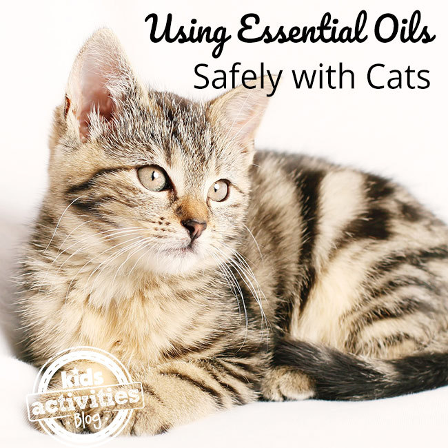 Safely Using Essential Oils with Cats