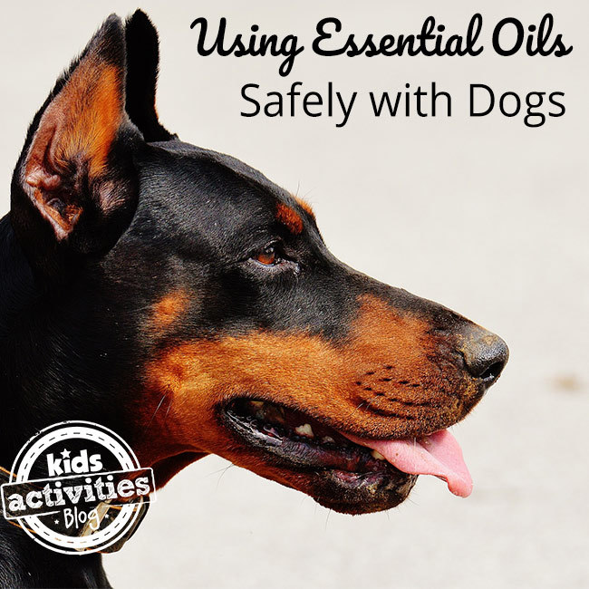 Safely Using Essential Oils with Dogs