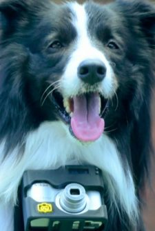 This Camera Takes Photos Of Everything That Excites Your Dog!