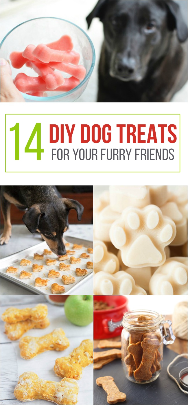 14 Diy Dog Treats For Your Furry Friend