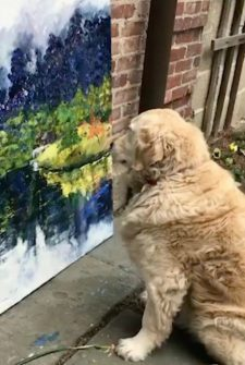 This Dog Could Be The World's First Canine Art Critic