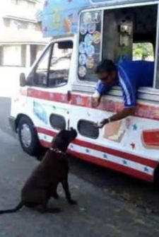 Ice Cream Stops Every Day To Give His Favorite Customer A Cone!