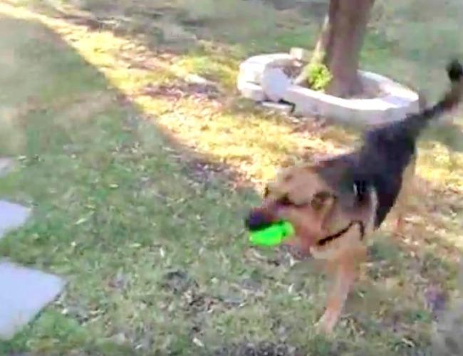 screenshot of playing fetch