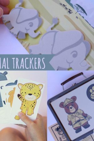 Animal Tracker Subscription Box - contents
