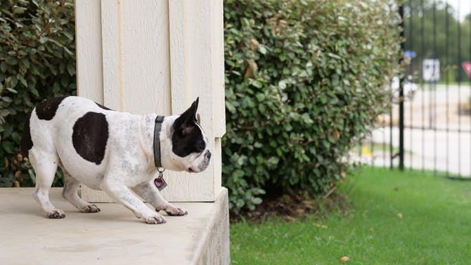 Dog Saying Hi