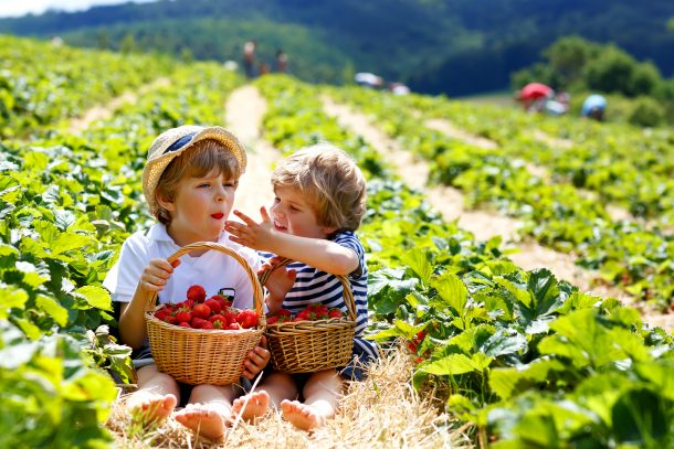 How To Feed Your Family Organic Food On The Cheap