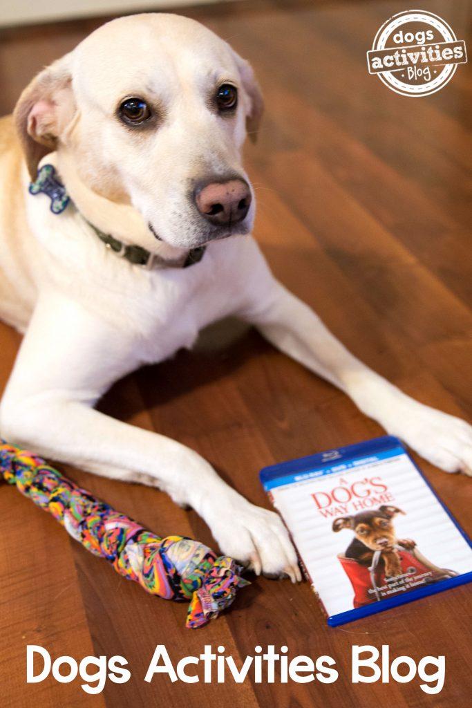 Dogs Activities Blog