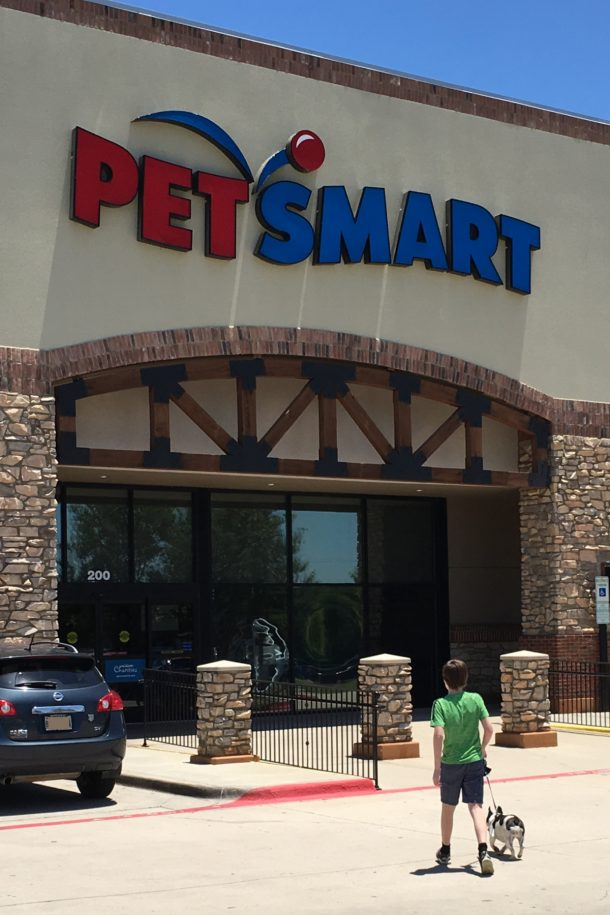 Panda Rhett PetSmart Walking in PetArmor Plus