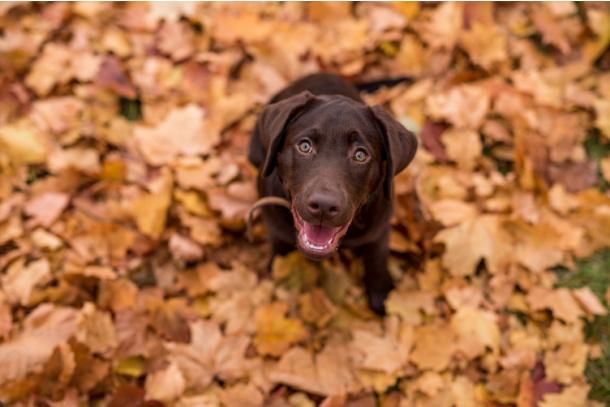 Find a brown leaf outside on fall nature scavenger hunt for kids - Kids Activities Blog