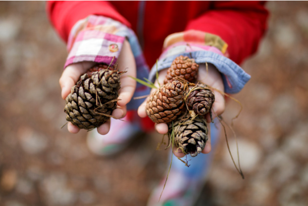 Find a pine cone on your fall nature scavenger hunt for kids - Kids Activities Blog