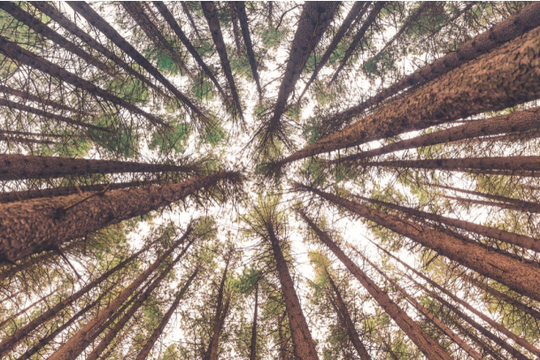 Find a tall tree on the nature scavenger hunt - Kids Activities Blog