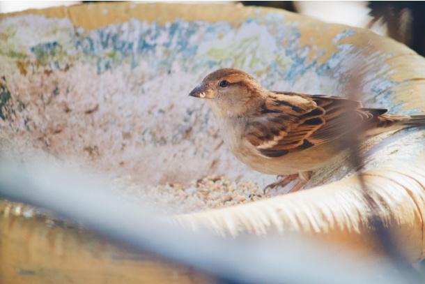 Find some seeds on fall nature scavenger hunt for kids - Kids Activities Blog