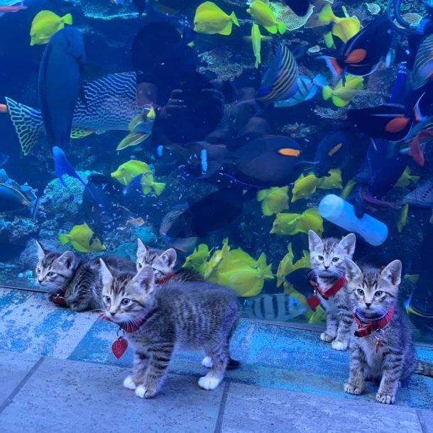 Chatons en aquarium