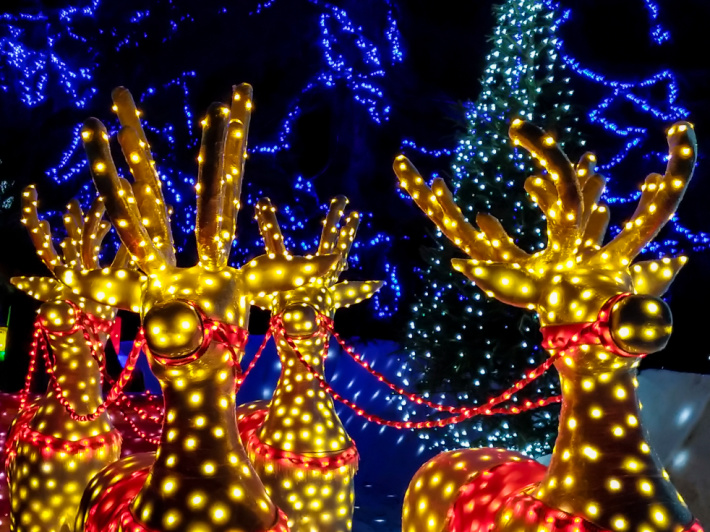 Holiday light search printable from Kids Activities Blog - lit reindeer shown with red harnesses.