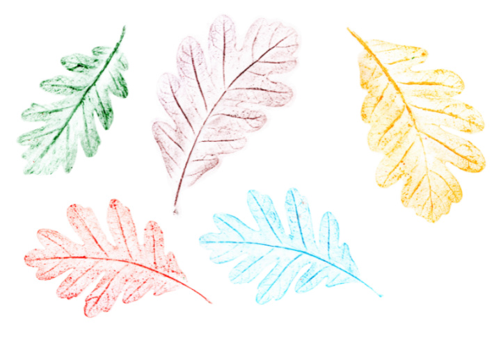 Leaf Crayon Rubbing - Kids activities blog - 5 leaf rubbings shown with crayon colors green, purple, yellow red and blue
