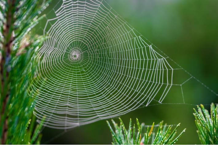 Spider web inspired dream catcher - Kids Activities Blog